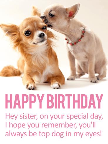 Similiar Funny Chihuahua Birthday Wishes Keywords