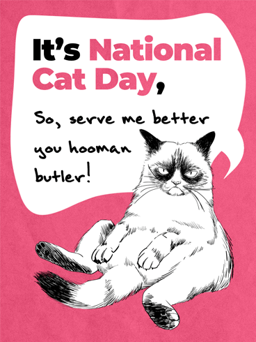 Serve Better Hooman! –  National Cat Day Cards