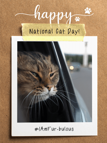 Fur-bulous Cat –  National Cat Day Cards