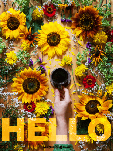 Sunflowers – Saying Hi Cards