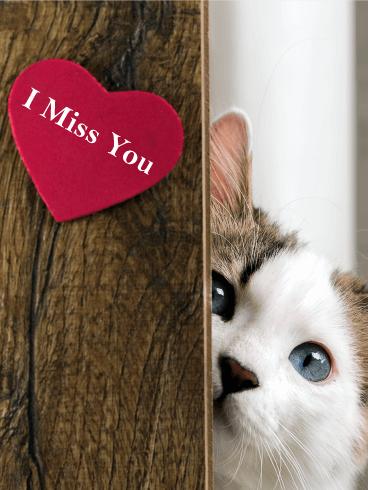 Peeking Cat Miss You Card