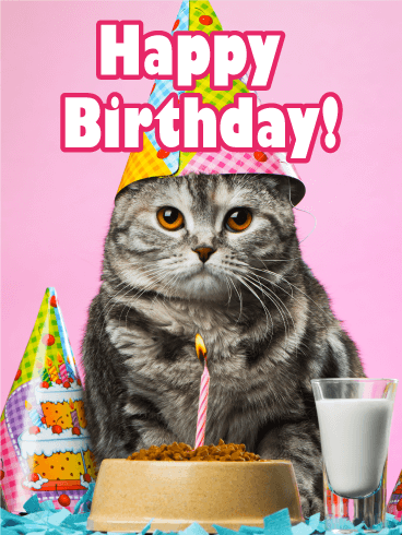 Birthday Party Cat Card