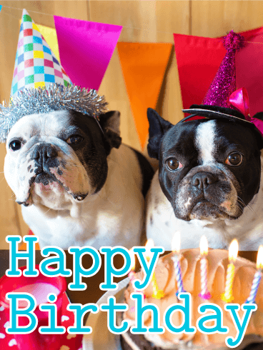 Two Birthday Dogs - Animal Birthday Card