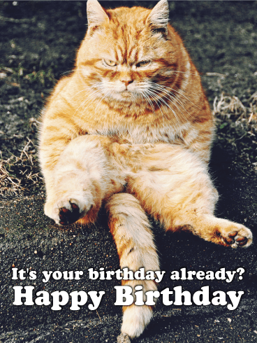 Grumpy kitty funny birthday card birthday greeting cards by davia grumpy kitty funny birthday card bookmarktalkfo Image collections