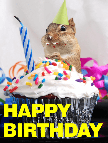 Glutton squirrel animal birthday card birthday greeting cards by glutton squirrel animal birthday card bookmarktalkfo Choice Image