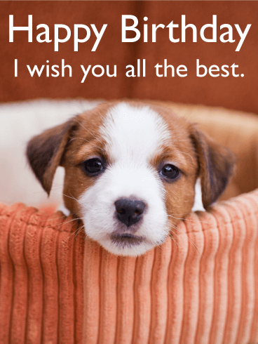 I Wish You All the Best - Animal Birthday Card