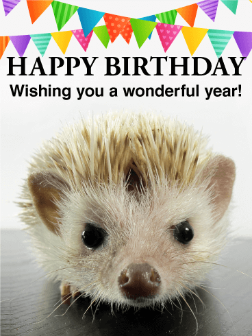 Cute Hedgehog Birthday Card