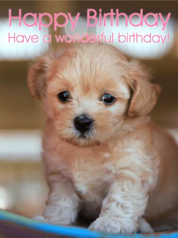 Cute Puppy Birthday Card Birthday Greeting Cards By Davia
