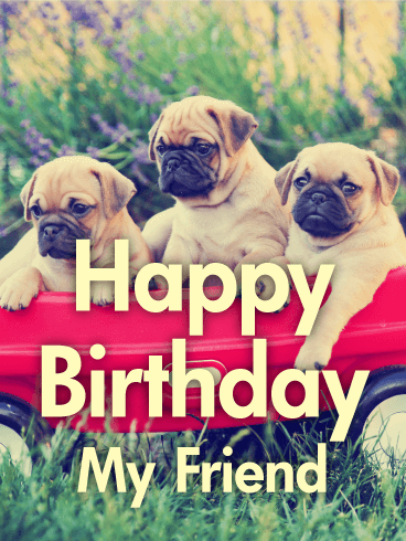 Three Best Pug Friends! Happy Birthday Card
