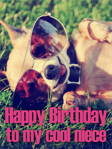 Furry Chihuahua Happy Birthday Card for Niece