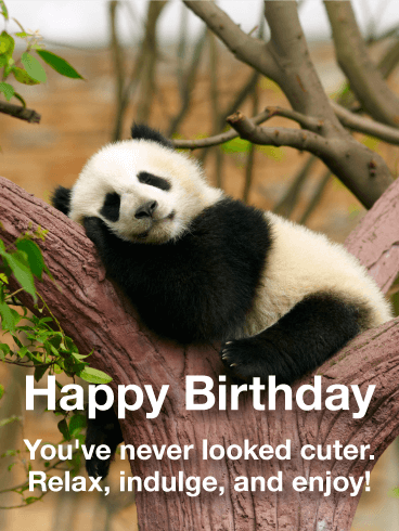 Adorable Panda Happy Birthday Card