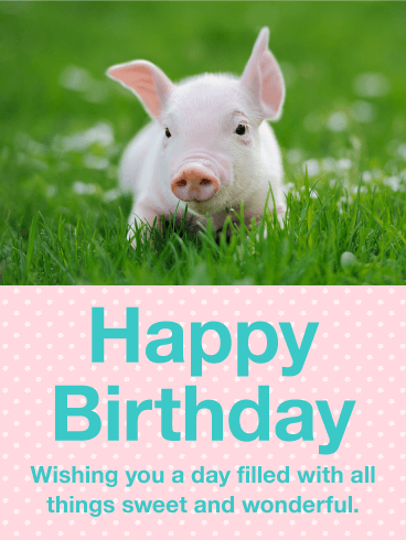Precious Pig Happy Birthday Card Birthday Greeting Cards By Davia