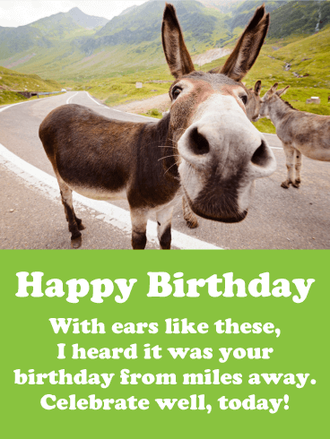 Donkey Happy Birthday Cards Birthday Greeting Cards By Davia