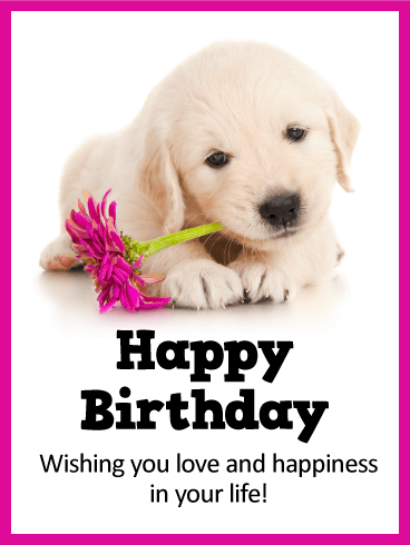 Sweet Puppy Happy Birthday Card