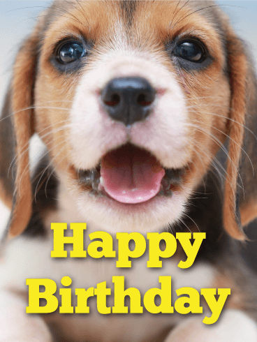 Cute Beagle Happy Birthday Card