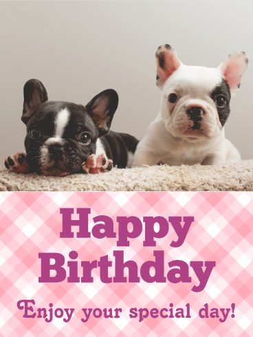 Adorable French Bulldog Birthday Card