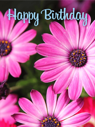 Pink Aster Happy Birthday Card