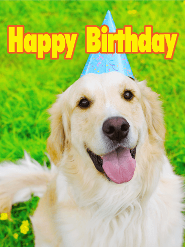 Charming Golden Retriever Happy Birthday Card