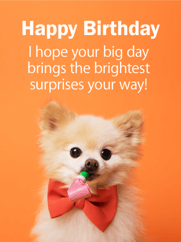 Adorable Pomeranian Happy Birthday Card