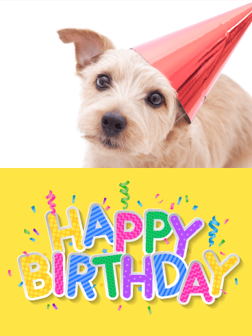 Cheerful Puppy Happy Birthday Card