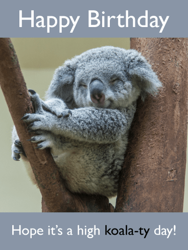 High Koala-ty – Funny Birthday Animal Cards
