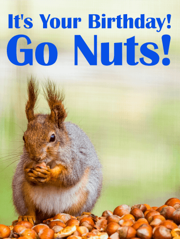 Go Nuts! Funny Birthday Card