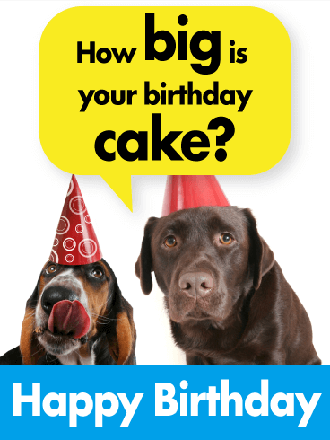 Dogs Love Your Birthday Cake - Funny Birthday Card