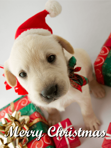 Santa Puppy Merry Christmas Card