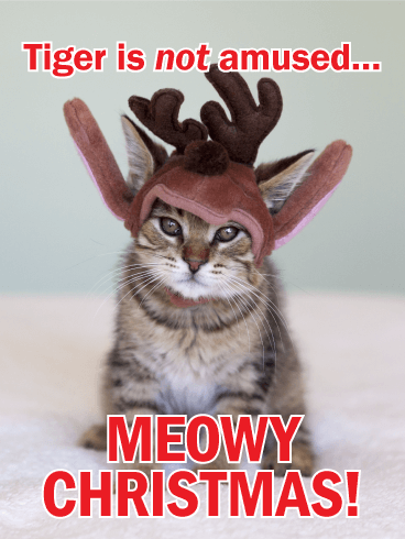 To Cat Lovers - Funny Merry Christmas Card