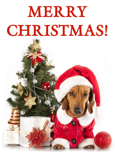 santa dachshund merry christmas card - Animal Christmas Cards