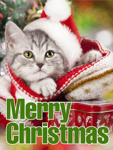 Santa Cat Merry Christmas Card