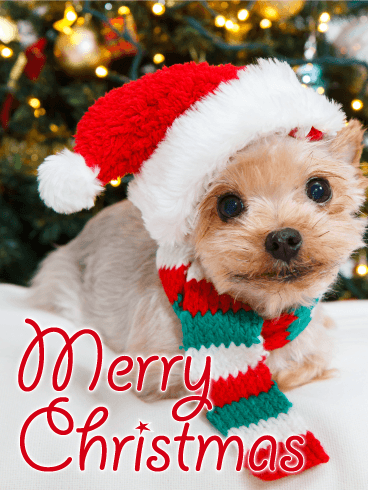 Santa Yorkshire Terrier Merry Christmas Card
