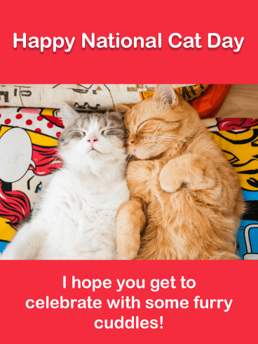 All the Cuddles - Happy National Cat Day Card