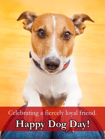 Loyal Jack Russell - Happy Dog Day Card