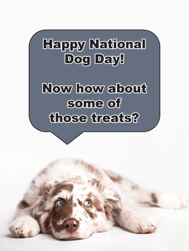 Treat Time? Happy National Dog Day Card