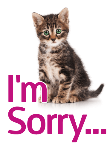 Cute Kitten I'm Sorry Card