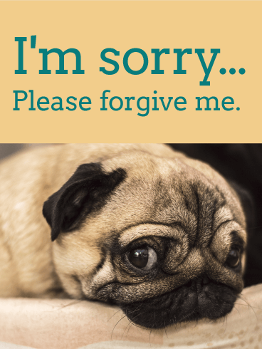 Please for give me pug im sorry card birthday greeting cards please for give me pug im sorry card altavistaventures Choice Image