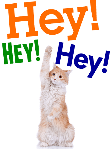 Saying Hey - Animal Greeting Card