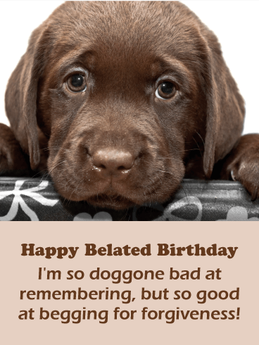 Adorable Doggy Funny Birthday Card