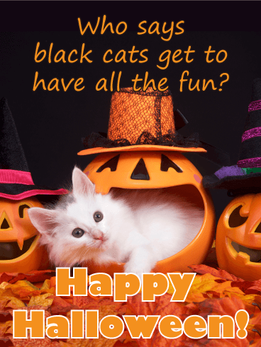 White Cat Have Fun! Funny Halloween Card