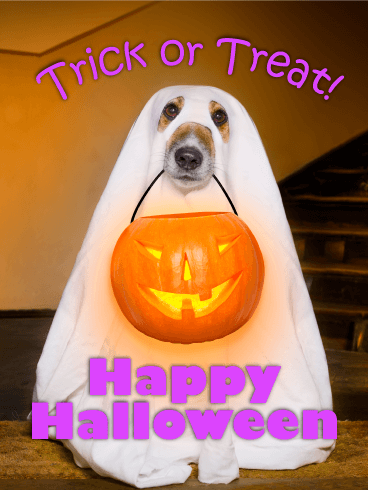 Trick or treat greeting cards birthday greeting cards by davia ghost dog happy halloween card m4hsunfo Choice Image