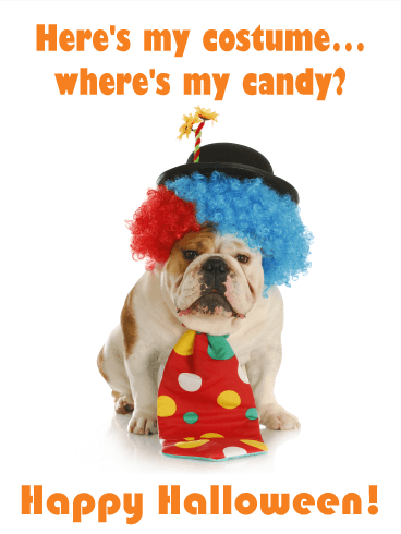 Where's my Candy? Funny Halloween Card