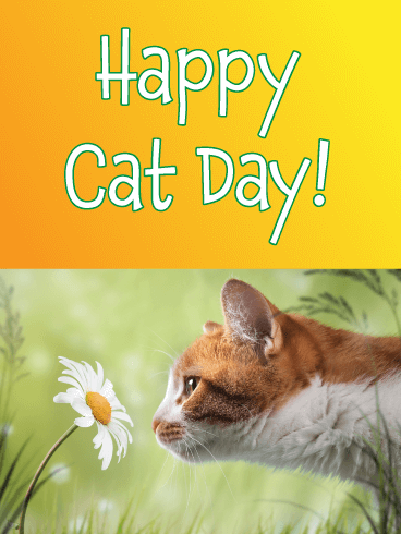 Pretty Flower – Happy Cat Day Card