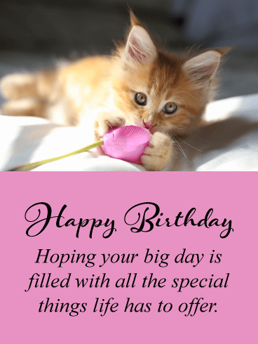 Precious Kitten - Happy Birthday Card