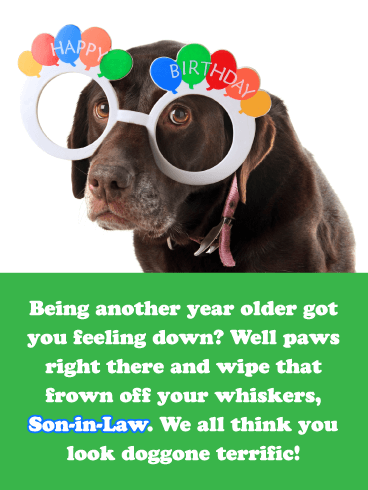 Doggone Terrific- Funny Happy Birthday Card for Son-In-Law