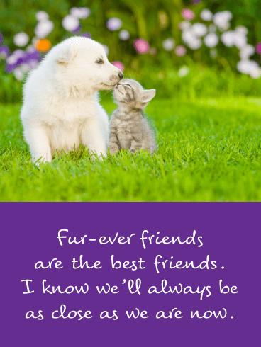 Fur-ever Friends - Friendship Card