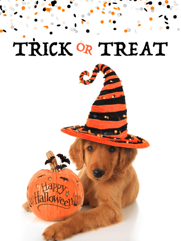 Trick or Treat Puppy – Happy Halloween Card