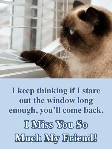 Cat Stares Out The Window-Miss You Card