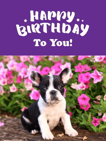 Adorable Puppy & Flowers - Happy Birthday Card