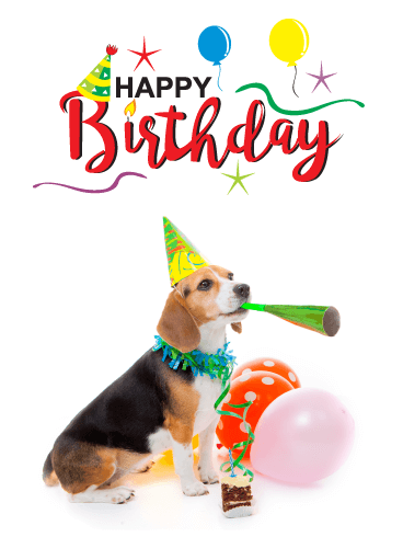 Cute Puppy Celebrating - Happy Birthday Card